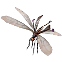 Unknown fly13.png